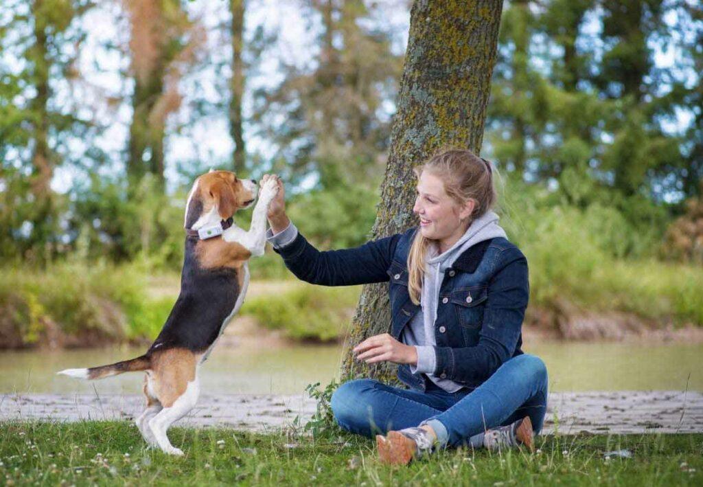 GPS Weenect Mascotas